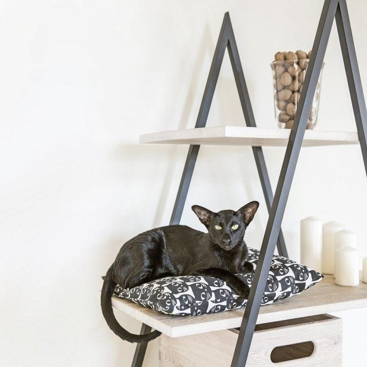 Regał na książki bakke - półki dąb bielony - ramiona czarny matowy lakier strukturalny (RAL 9004) i kot na poduszce