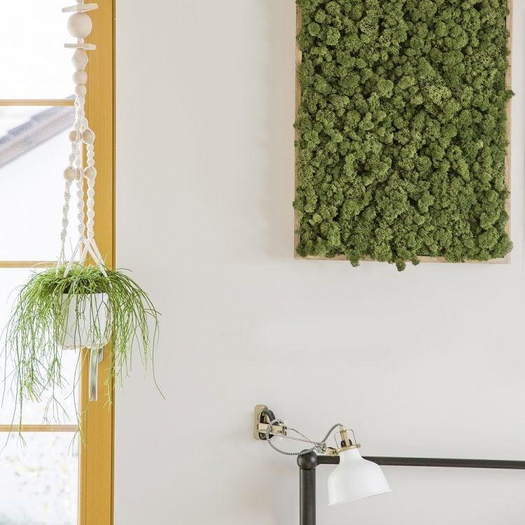 ama gate wisząca na ścianie z mchem reniferowym