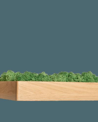 Rama gate z zielonym chrobotkiem