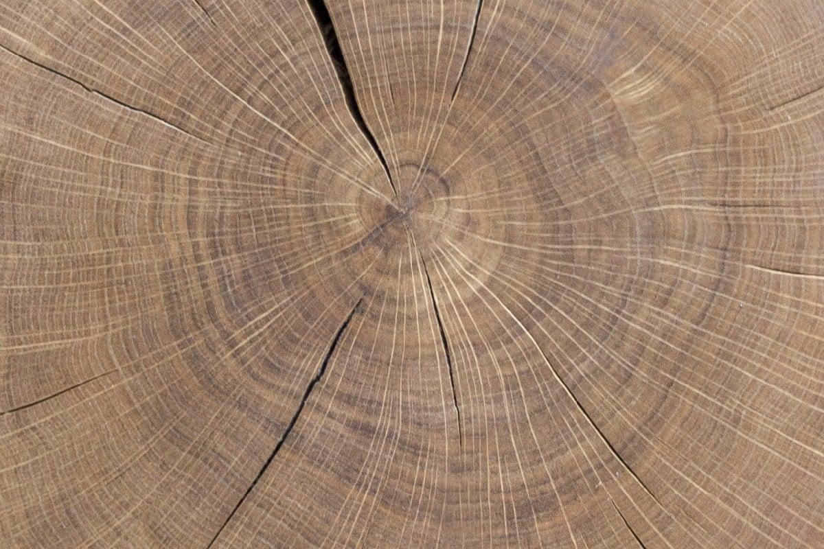 historia drewna
