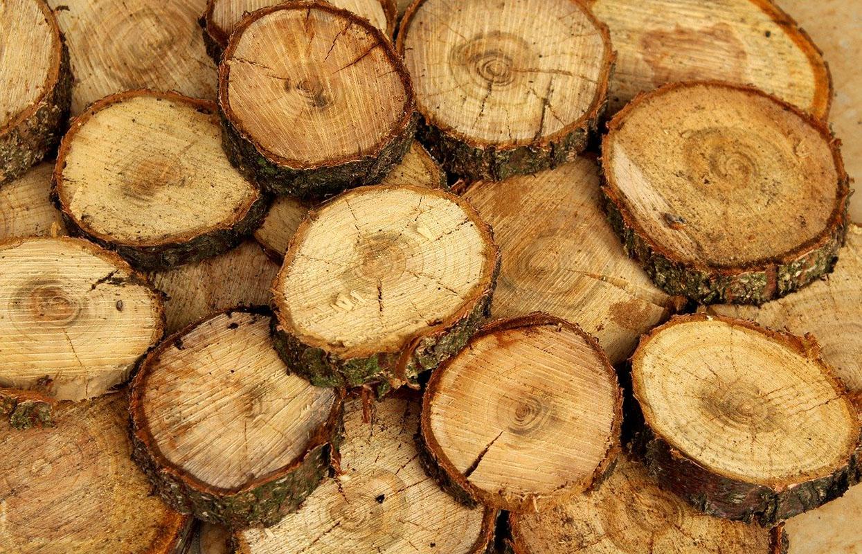 pnie drzewa, różnice drewna